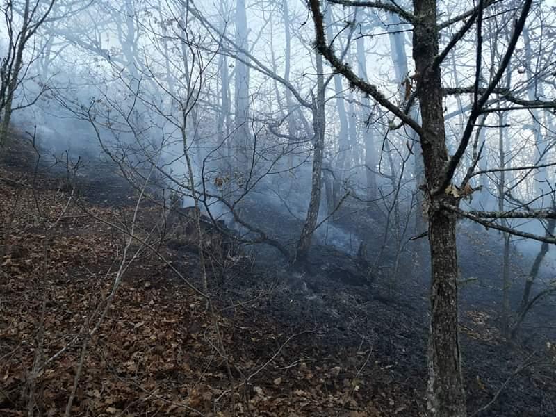 МЗШВ воведува забрана за движење во шума и шумско земјиште