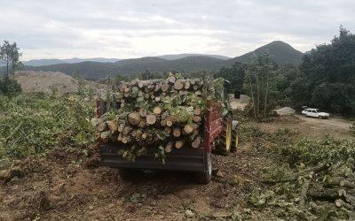 ОУ Дебрца доби донација од 150 м3 дрво за огрев